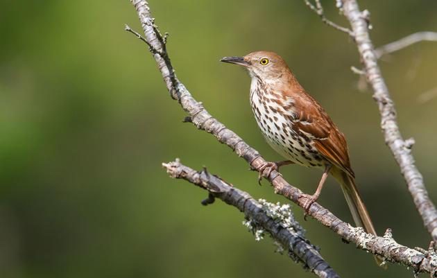 Kernville Bird Watching